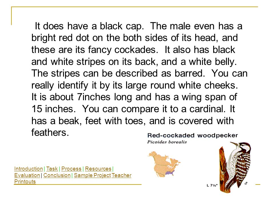 A cockade is a hat decoration. Have you ever seen a woodpecker wear a dressy hat? IntroductionIntroduction | Task | Process | Resources | Evaluation |