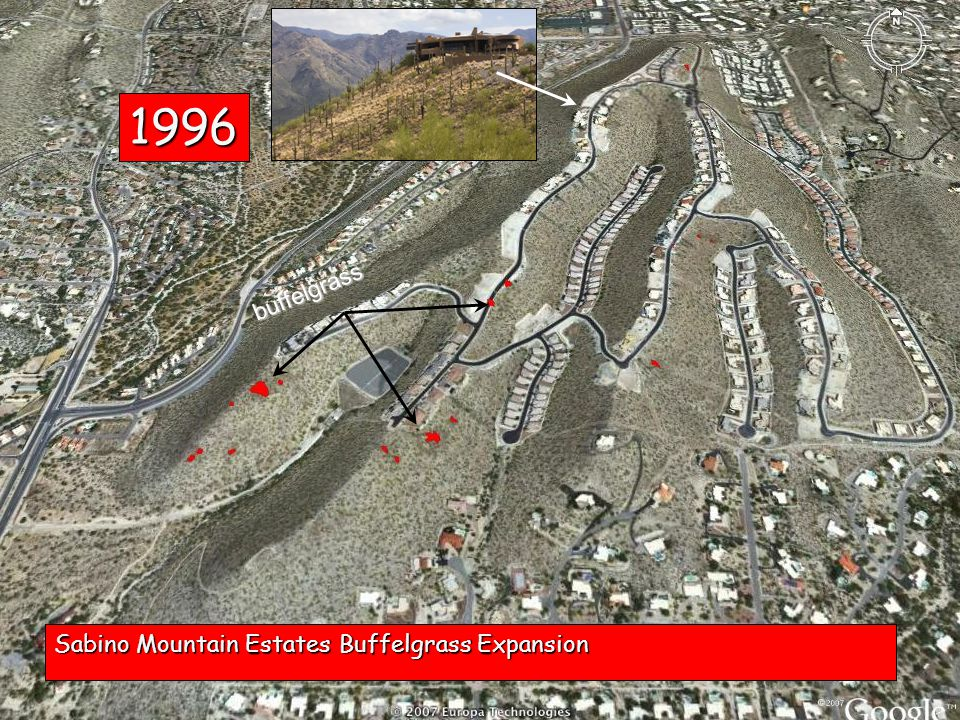 1996 Sabino Mountain Estates Buffelgrass Expansion buffelgrass
