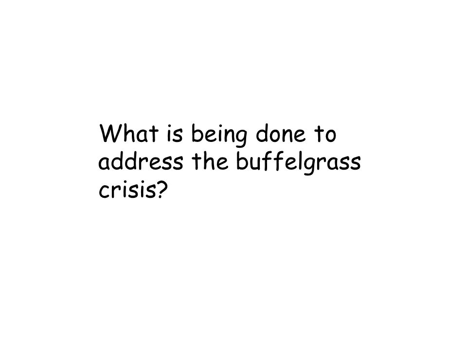 What is being done to address the buffelgrass crisis?