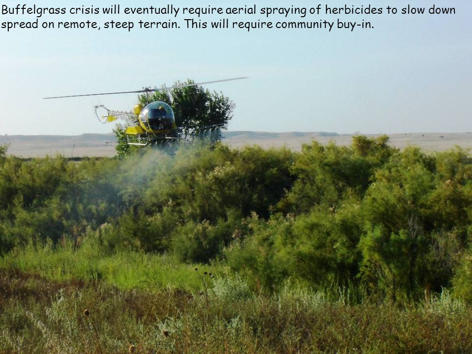 Buffelgrass crisis will eventually require aerial spraying of herbicides to slow down spread on remote, steep terrain. This will require community buy