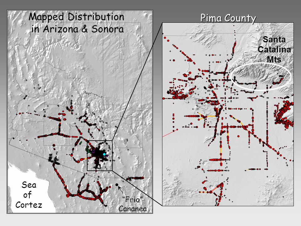 Mapped Distribution in Arizona & Sonora Pima County Sea of Cortez Santa Catalina Mts Frio Cananea