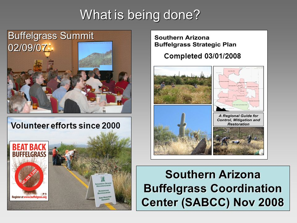 Southern Arizona Buffelgrass Coordination Center (SABCC) Nov 2008 Buffelgrass Summit 02/09/07 Volunteer efforts since 2000 Completed 03/01/2008 What is being done