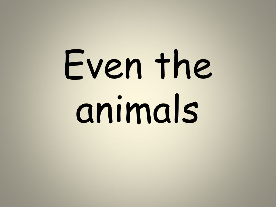 Even the animals