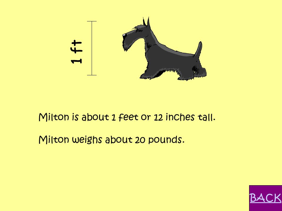 Milton is about 1 feet or 12 inches tall. Milton weighs about 20 pounds. BACK