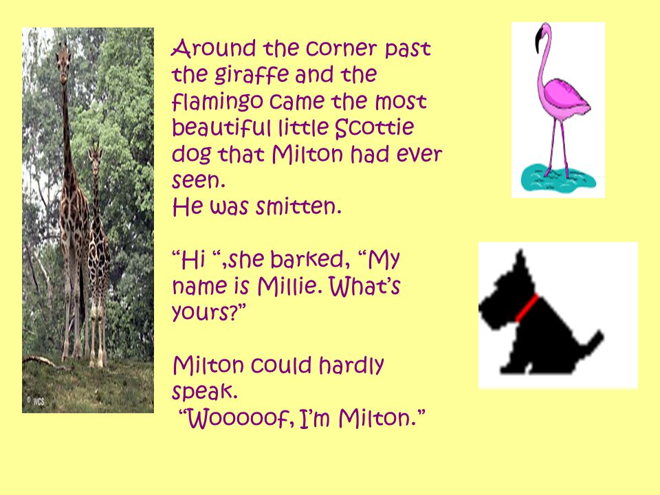 "Around the corner past the giraffe and the flamingo came the most beautiful little Scottie dog that Milton had ever seen. He was smitten. ""Hi "",she ba"