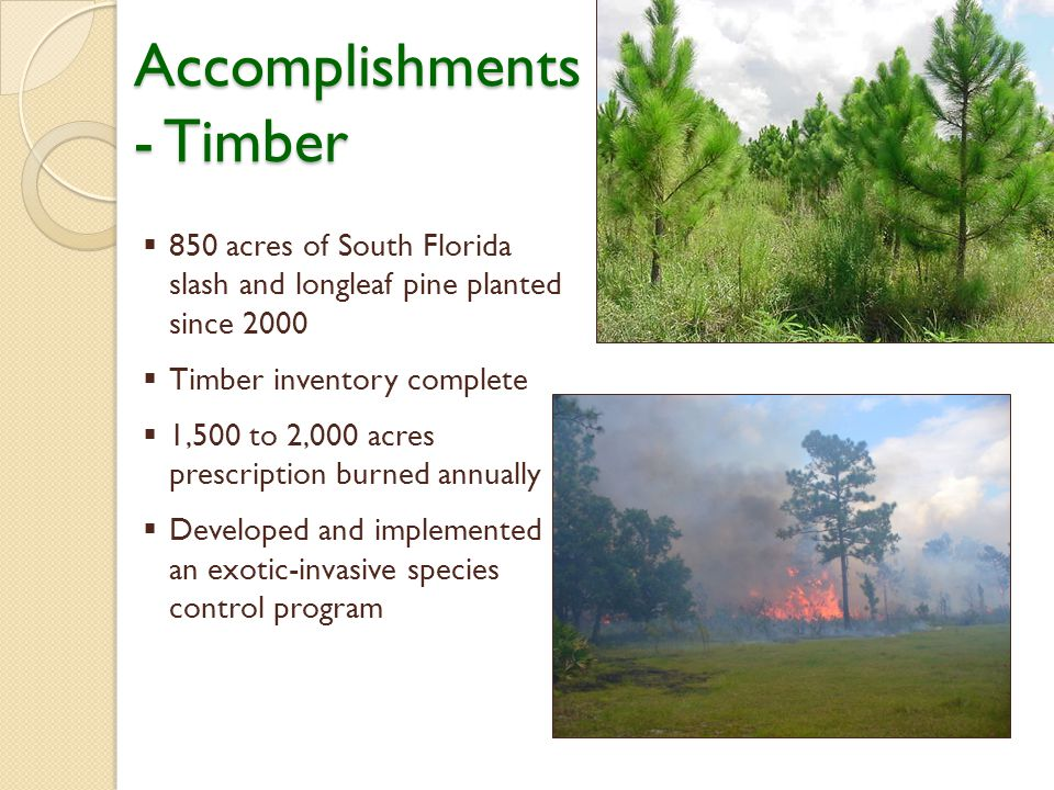  850 acres of South Florida slash and longleaf pine planted since 2000  Timber inventory complete  1,500 to 2,000 acres prescription burned annually  Developed and implemented an exotic-invasive species control program Accomplishments - Timber