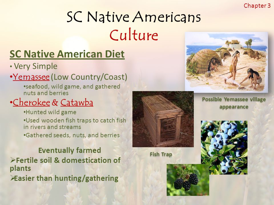 SC Native American Diet Very Simple Yemassee (Low Country/Coast) seafood, wild game, and gathered nuts and berries Cherokee & Catawba Hunted wild game Used wooden fish traps to catch fish in rivers and streams Gathered seeds, nuts, and berries Eventually farmed  Fertile soil & domestication of plants  Easier than hunting/gathering Fish Trap SC Native Americans Culture Chapter 3 Possible Yemassee village appearance
