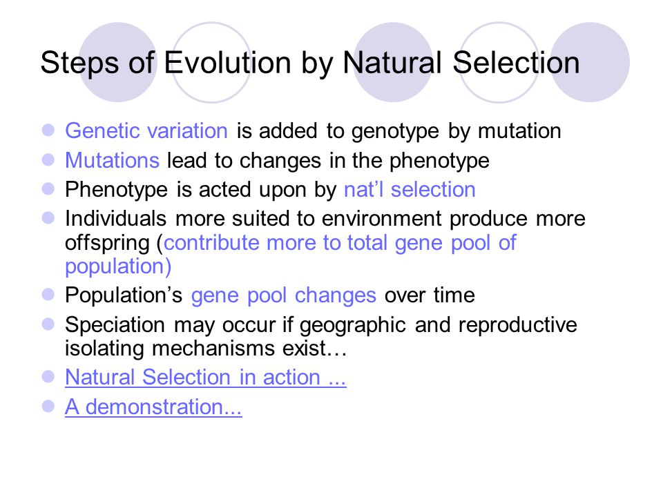 Steps of Evolution by Natural Selection Genetic variation is added to genotype by mutation Mutations lead to changes in the phenotype Phenotype is act