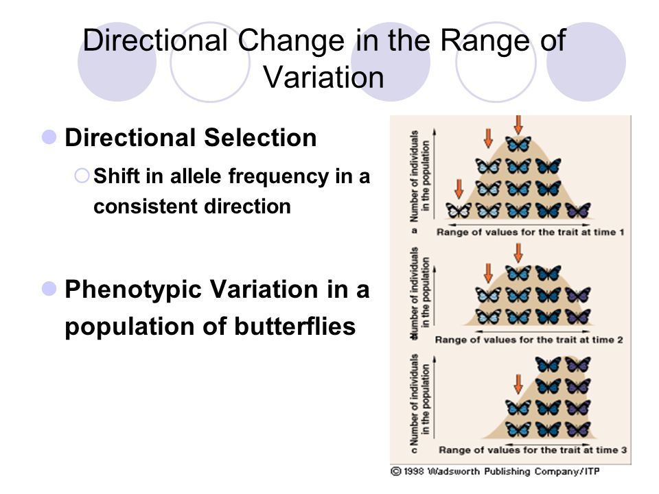 Directional Change in the Range of Variation Directional Selection  Shift in allele frequency in a consistent direction Phenotypic Variation in a pop
