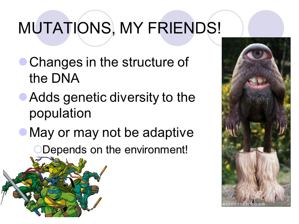 MUTATIONS, MY FRIENDS! Changes in the structure of the DNA Adds genetic diversity to the population May or may not be adaptive  Depends on the enviro