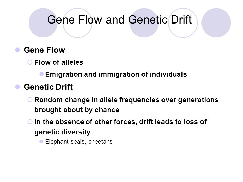 Gene Flow and Genetic Drift Gene Flow  Flow of alleles Emigration and immigration of individuals Genetic Drift  Random change in allele frequencies