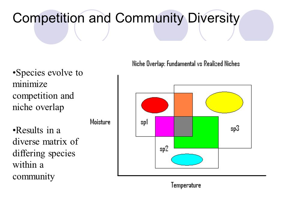 Competition and Community Diversity Species evolve to minimize competition and niche overlap Results in a diverse matrix of differing species within a