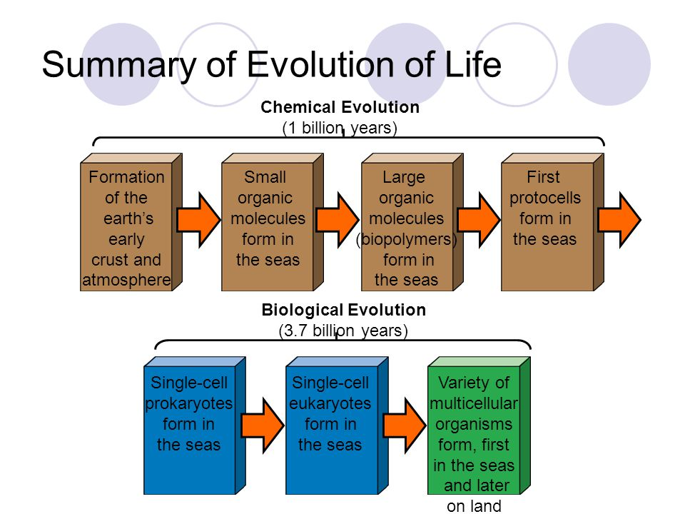 Summary of Evolution of Life Formation of the earth's early crust and atmosphere Small organic molecules form in the seas Large organic molecules (bio