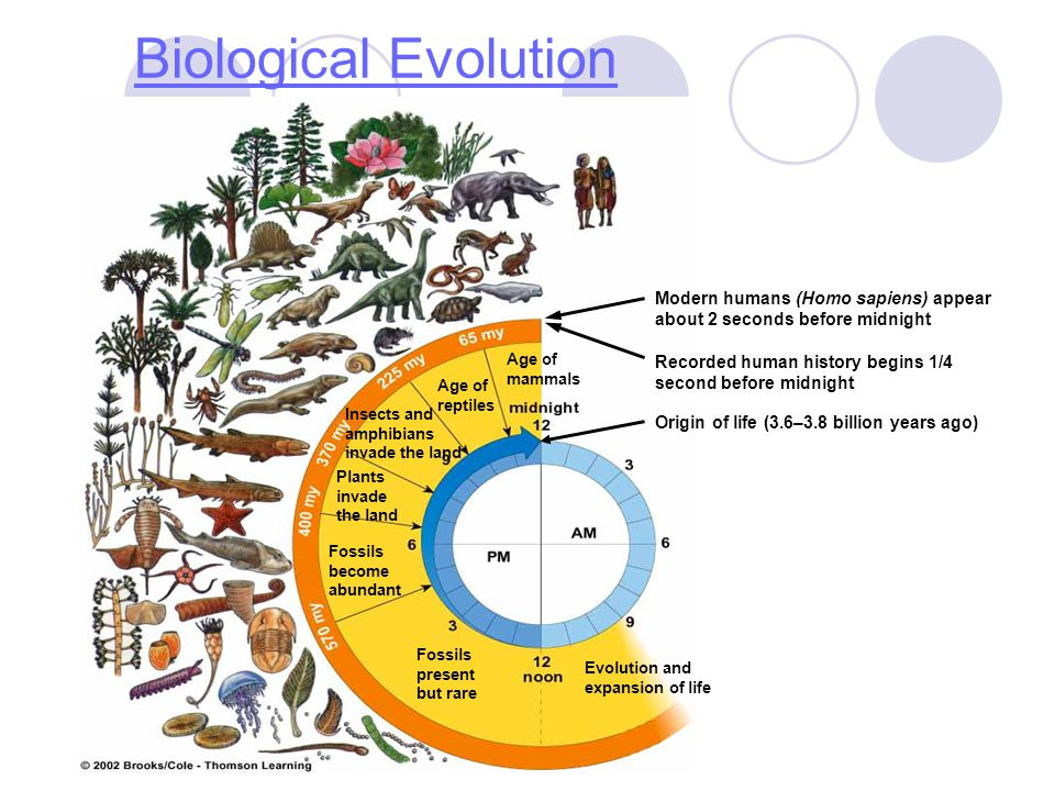 Biological Evolution Fossils present but rare Evolution and expansion of life Fossils become abundant Plants invade the land Age of reptiles Age of ma