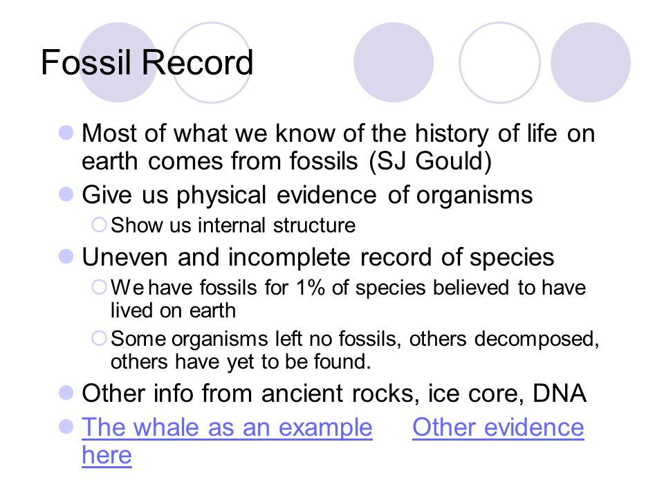 Fossil Record Most of what we know of the history of life on earth comes from fossils (SJ Gould) Give us physical evidence of organisms  Show us inte