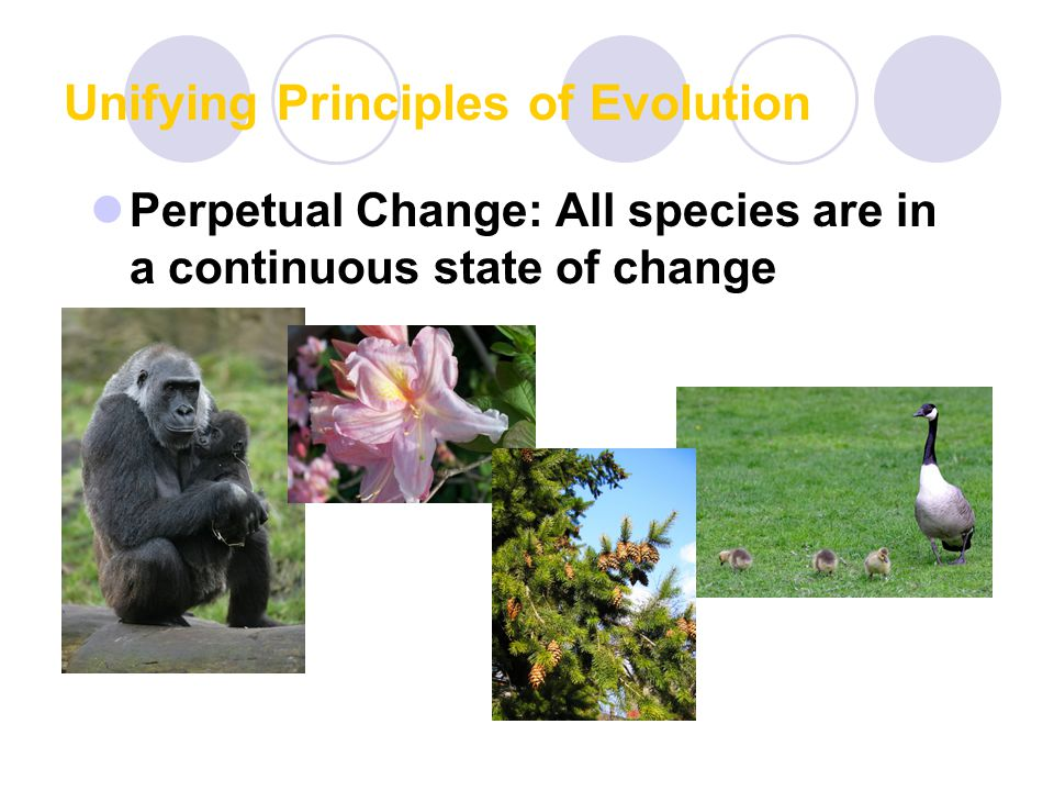 Unifying Principles of Evolution Perpetual Change: All species are in a continuous state of change