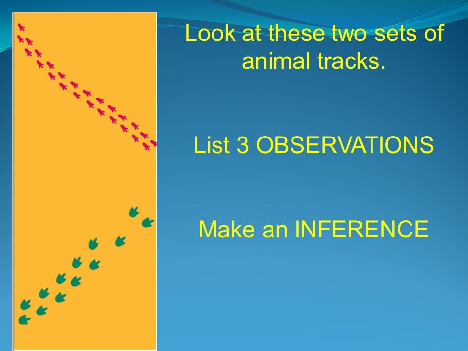 Now what do you think? Make 3 OBSERVATIONS Make an INFERENCE