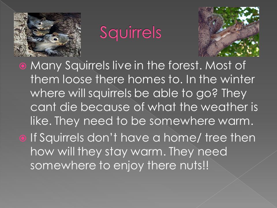 Many Squirrels live in the forest. Most of them loose there homes to.