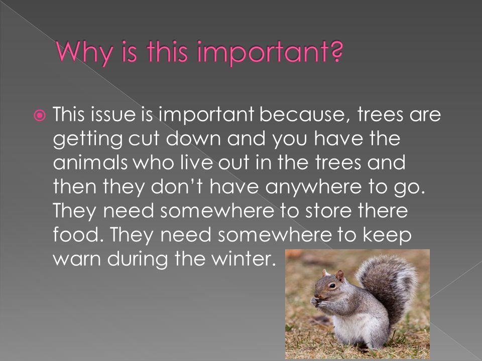  This issue is important because, trees are getting cut down and you have the animals who live out in the trees and then they don't have anywhere to go.