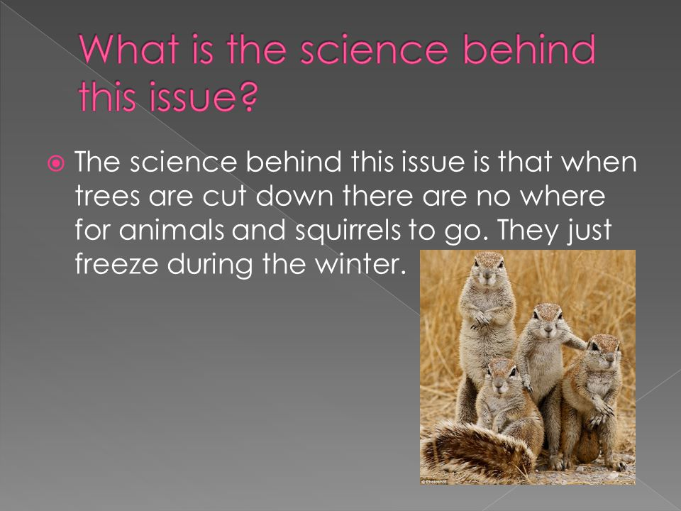  The science behind this issue is that when trees are cut down there are no where for animals and squirrels to go.