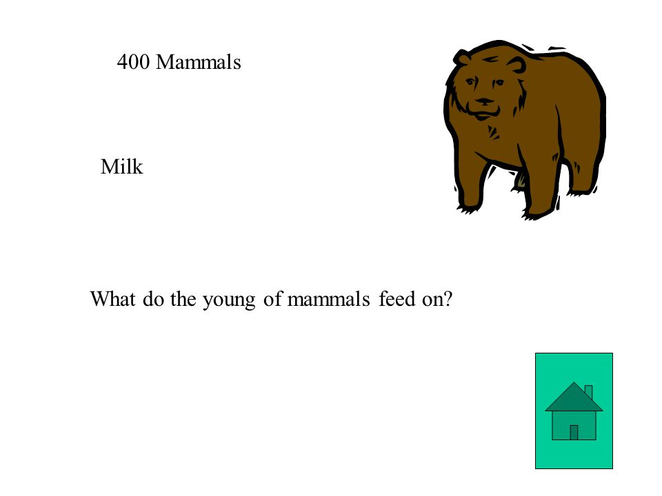 400 Mammals Milk What do the young of mammals feed on?