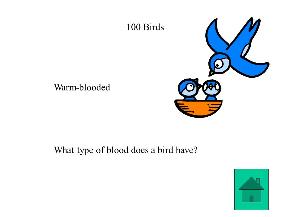 100 Birds Warm-blooded What type of blood does a bird have?