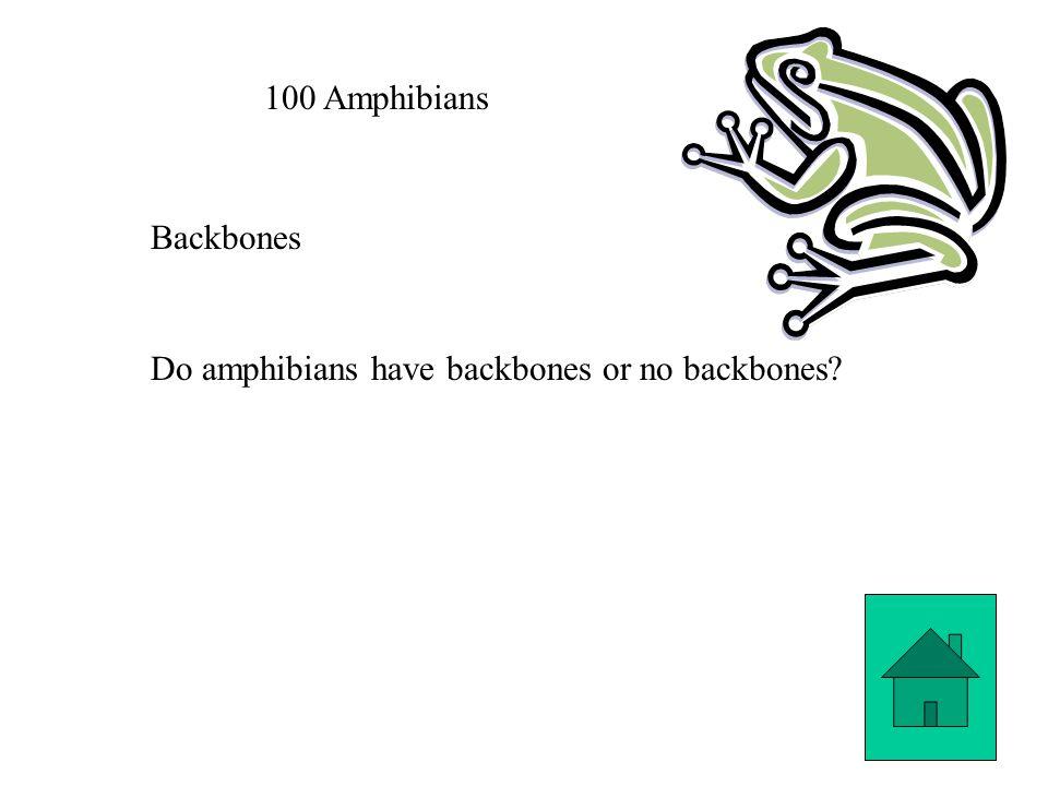100 Amphibians Backbones Do amphibians have backbones or no backbones?