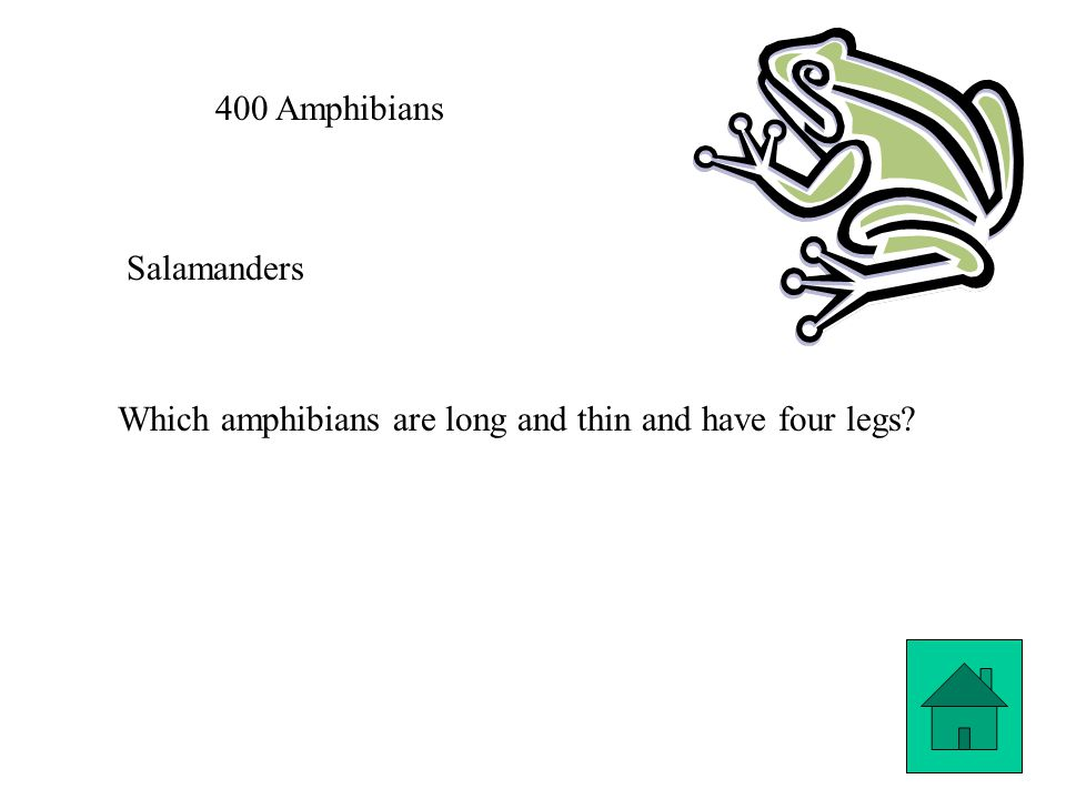 400 Amphibians Salamanders Which amphibians are long and thin and have four legs?