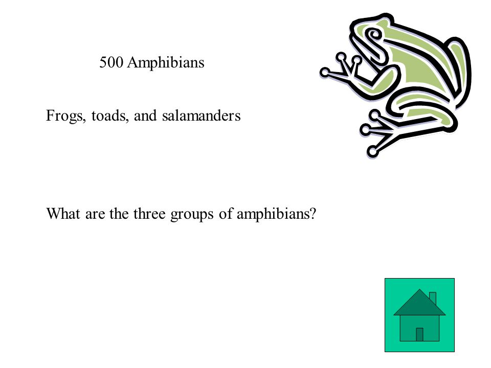 500 Amphibians Frogs, toads, and salamanders What are the three groups of amphibians?