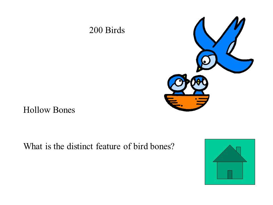 200 Birds Hollow Bones What is the distinct feature of bird bones?