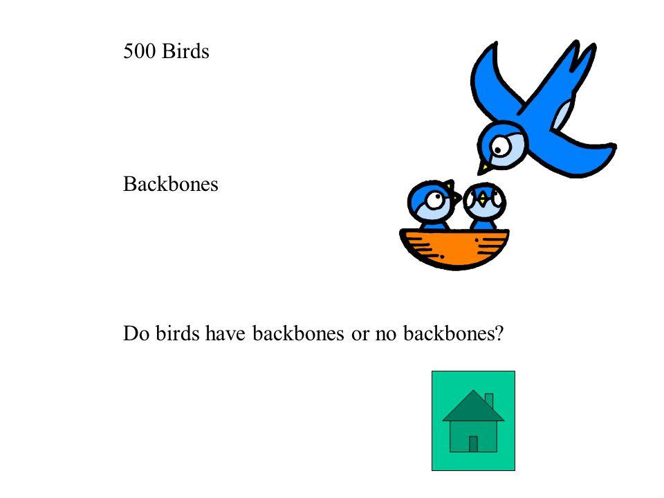 500 Birds Backbones Do birds have backbones or no backbones?