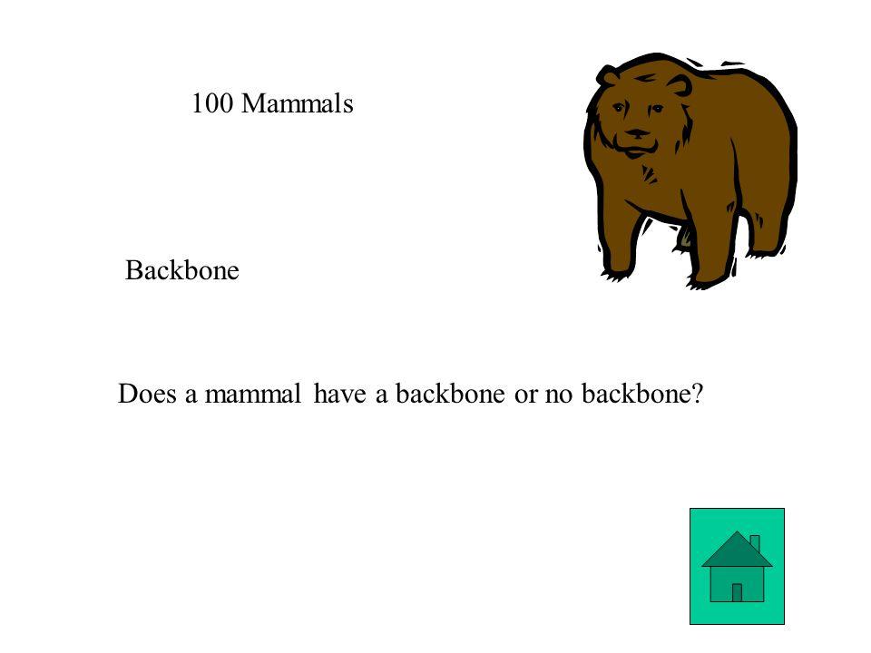 100 Mammals Backbone Does a mammal have a backbone or no backbone?