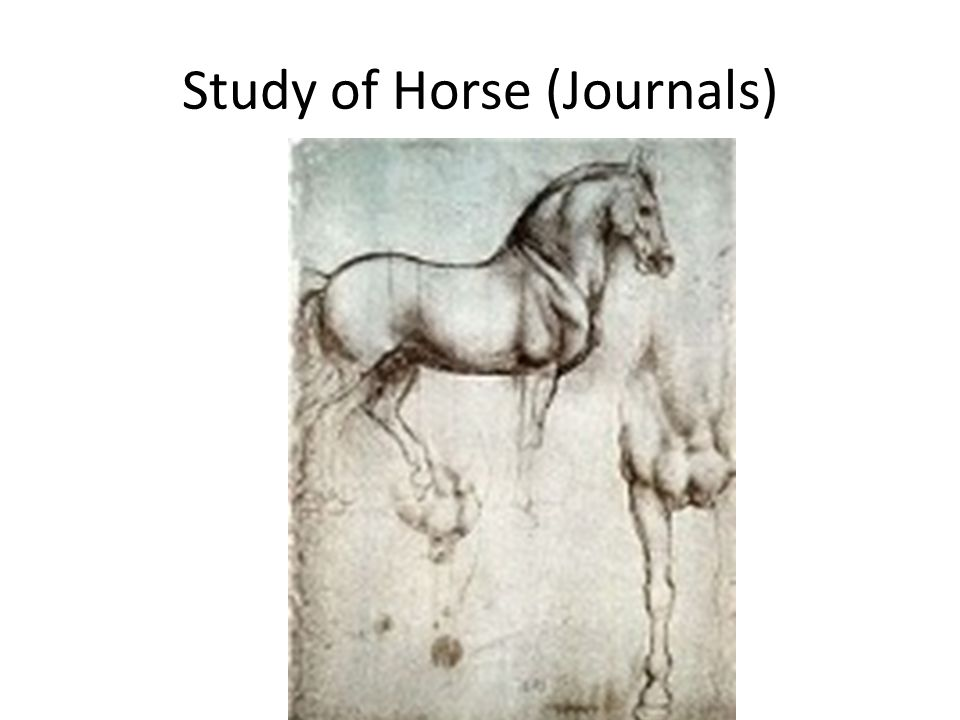Study of Horse (Journals)