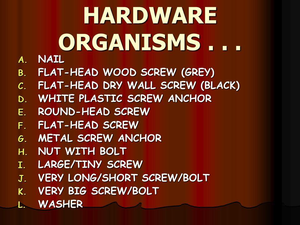 HARDWARE ORGANISMS...A. NAIL B. FLAT-HEAD WOOD SCREW (GREY) C.