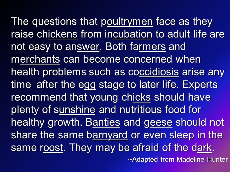 The questions that poultrymen face as they raise chickens from incubation to adult life are not easy to answer.
