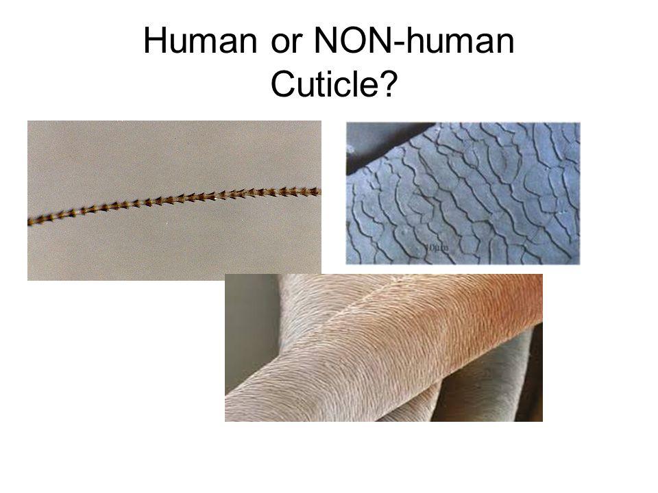 Human or NON-human Cuticle?