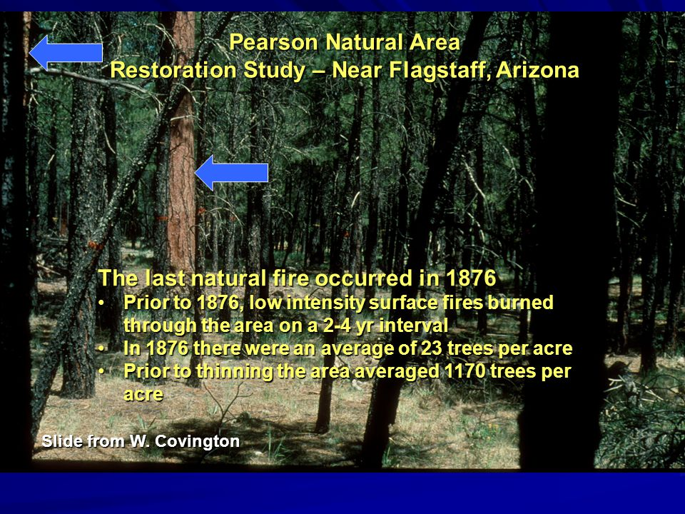 Pearson Natural Area Restoration Study – Near Flagstaff, Arizona The last natural fire occurred in 1876 Prior to 1876, low intensity surface fires burned through the area on a 2-4 yr intervalPrior to 1876, low intensity surface fires burned through the area on a 2-4 yr interval In 1876 there were an average of 23 trees per acreIn 1876 there were an average of 23 trees per acre Prior to thinning the area averaged 1170 trees per acrePrior to thinning the area averaged 1170 trees per acre Slide from W.