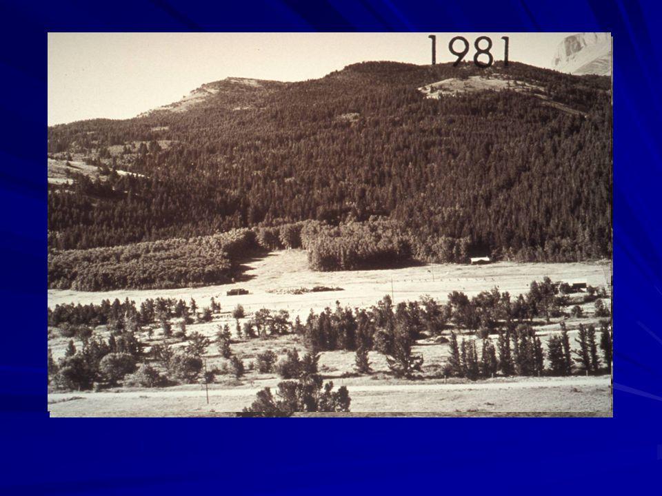 South Fork Teton River Lewis & Clark NF, MT