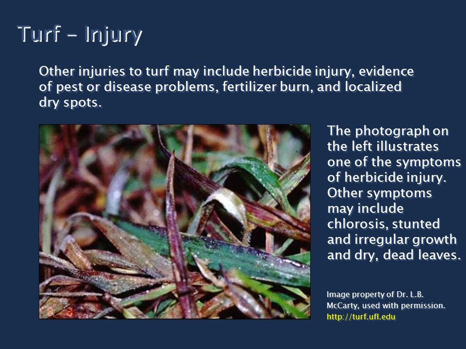 Turf - Injury Other injuries to turf may include herbicide injury, evidence of pest or disease problems, fertilizer burn, and localized dry spots.