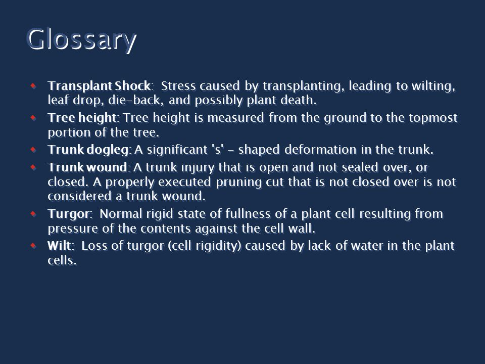 Transplant Shock: Stress caused by transplanting, leading to wilting, leaf drop, die-back, and possibly plant death.  Tree height: Tree height is m
