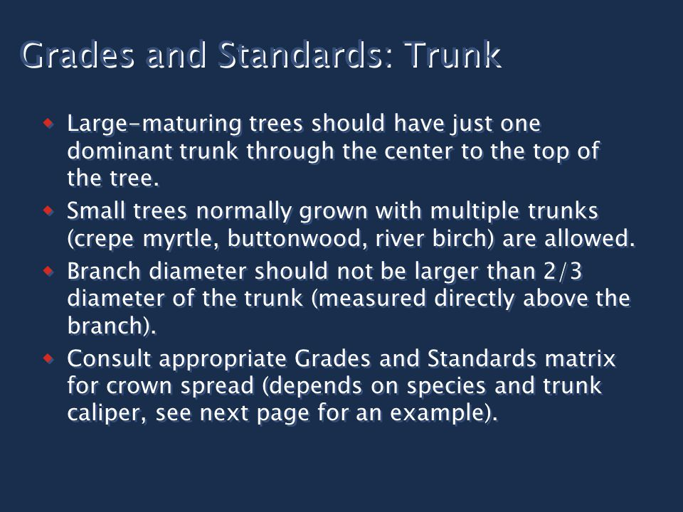 Grades and Standards: Trunk  Large-maturing trees should have just one dominant trunk through the center to the top of the tree.