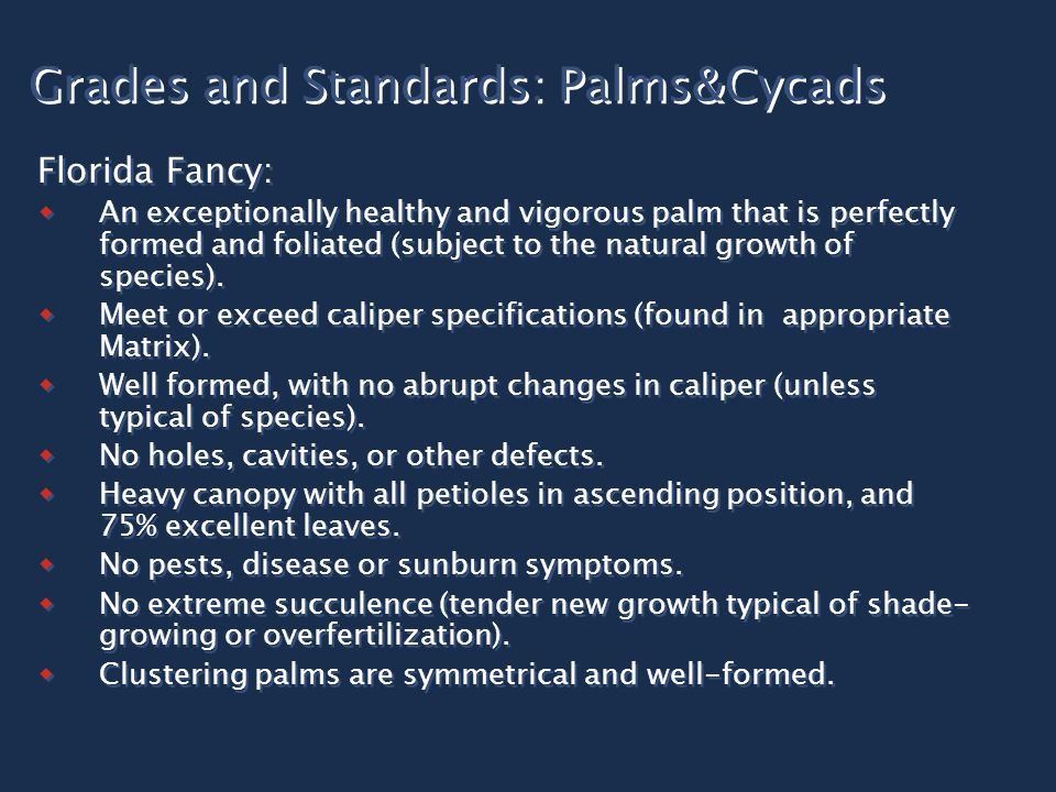 Grades and Standards: Palms&Cycads Florida Fancy:  An exceptionally healthy and vigorous palm that is perfectly formed and foliated (subject to the natural growth of species).