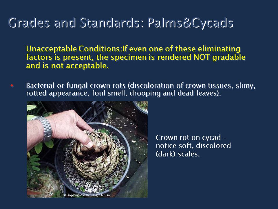 Grades and Standards: Palms&Cycads Unacceptable Conditions:If even one of these eliminating factors is present, the specimen is rendered NOT gradable and is not acceptable.