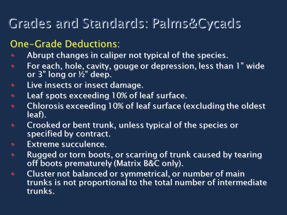 Grades and Standards: Palms&Cycads One-Grade Deductions:  Abrupt changes in caliper not typical of the species.  For each, hole, cavity, gouge or de