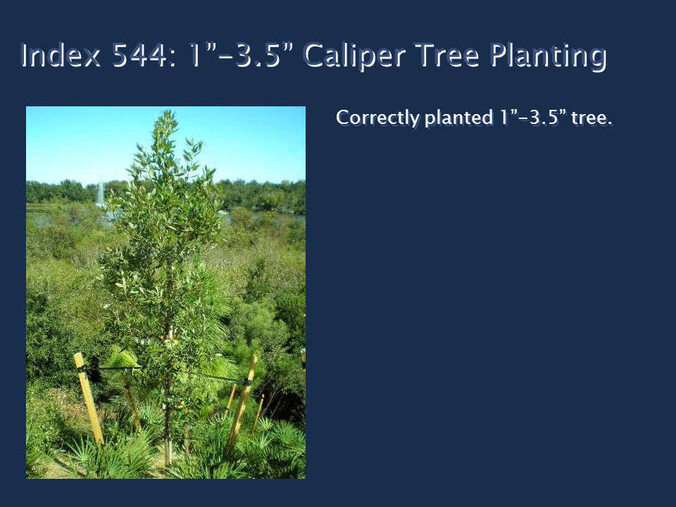 Index 544: 1 -3.5 Caliper Tree Planting Correctly planted 1 -3.5 tree.