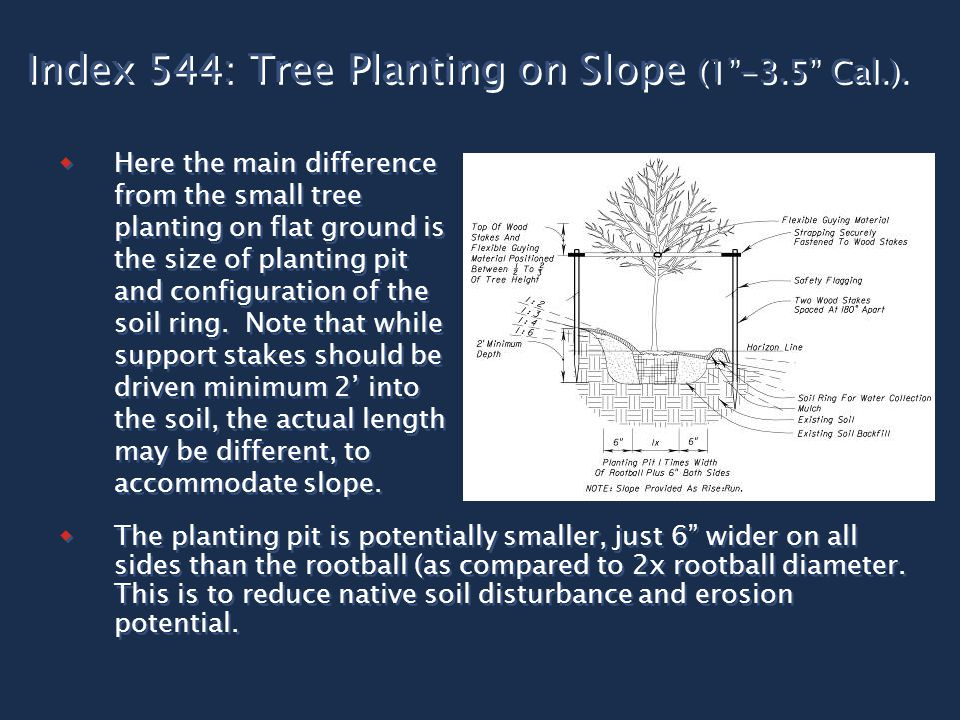 "Index 544: Tree Planting on Slope (1""-3.5"" Cal.).  Here the main difference from the small tree planting on flat ground is the size of planting pit a"