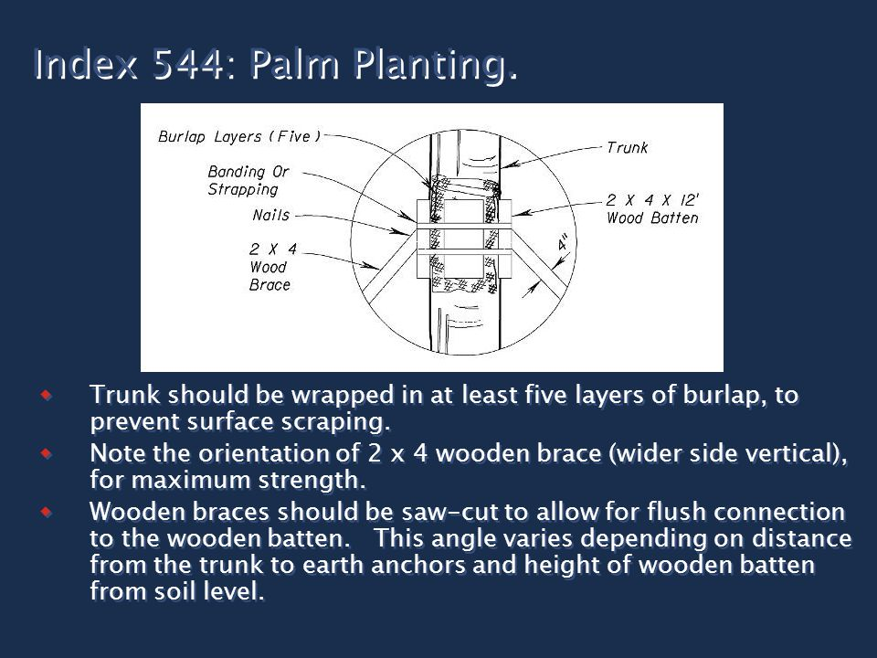 Index 544: Palm Planting.