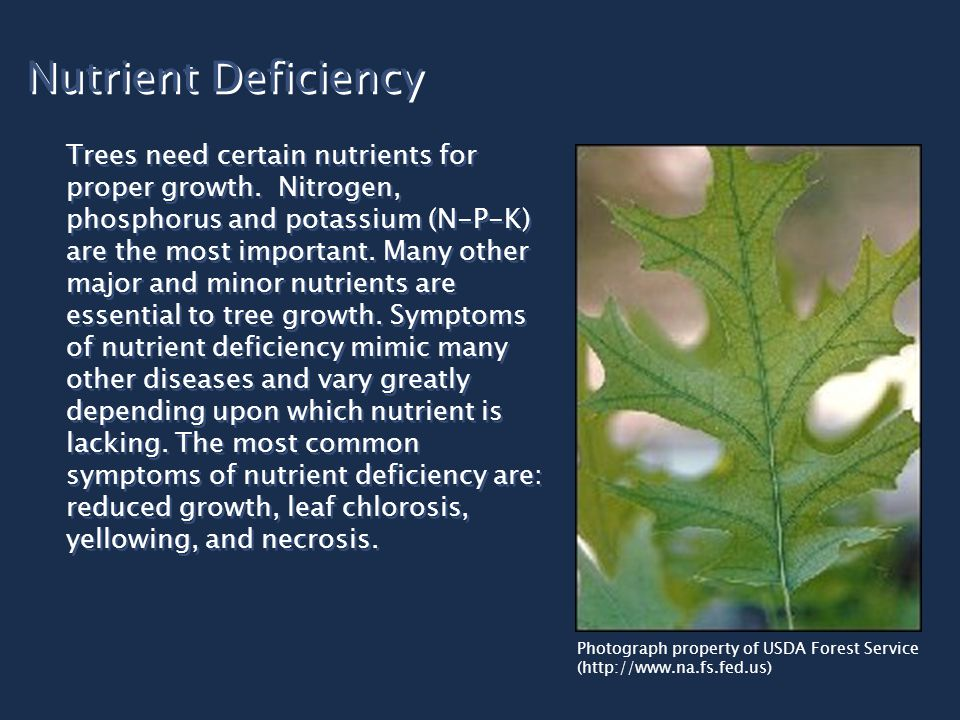 Nutrient Deficiency Trees need certain nutrients for proper growth.