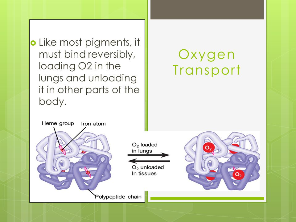  Like most pigments, it must bind reversibly, loading O2 in the lungs and unloading it in other parts of the body.