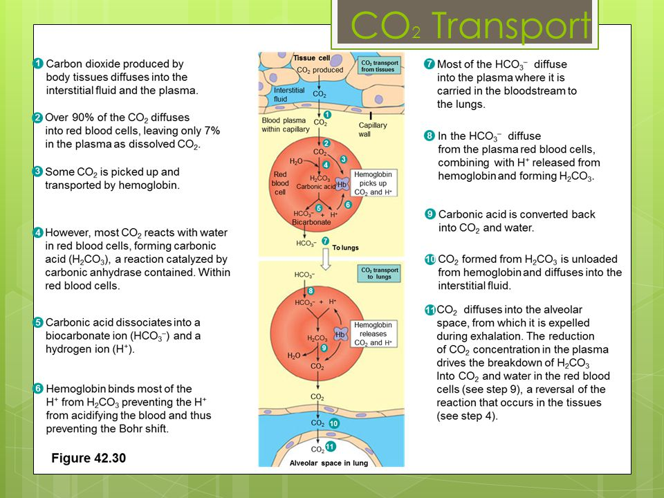CO 2 Transport